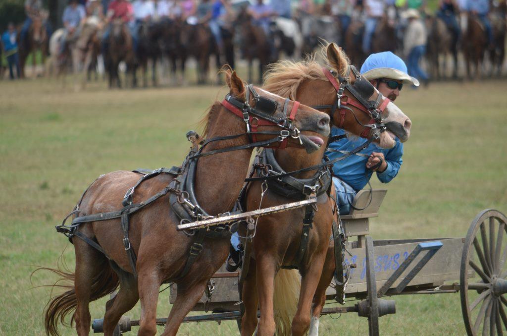 Dit Is Het Programma Van Paardenspektakel 2022 In Apeldoorn I Uitinapeldoorn